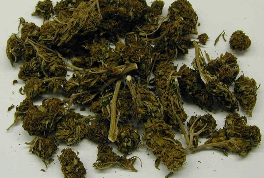 Legalna lecznicza marihuana?