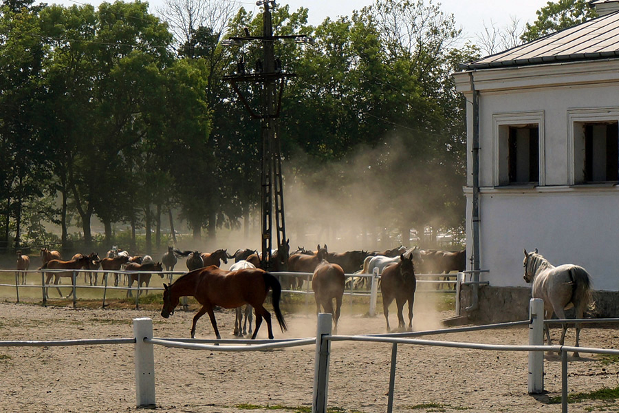PO złoży do NIK wniosek o kontrolę w stadninach koni arabskich
